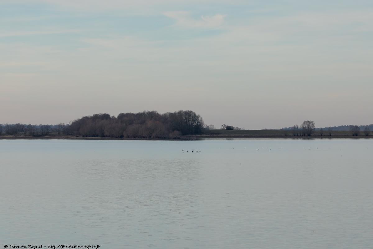 île de Chantecoq depuis Giffaumont-Champaubert